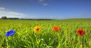 Flores en una fila Imágenes de archivo libres de regalías