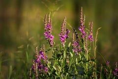 Flores en una mañana del verano Imagen de archivo libre de regalías