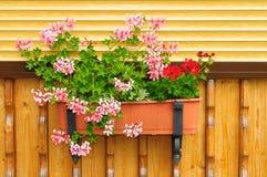 Flores en una maceta. Fotografía de archivo libre de regalías