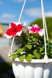 Flores en una maceta Imagen de archivo libre de regalías