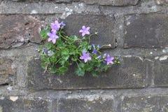 Flores en una pared Foto de archivo libre de regalías