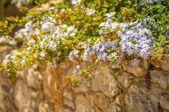 Flores en una pared de piedra Foto de archivo