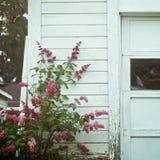 Flores en una vertiente Fotos de archivo
