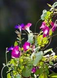 Flores en una vid Imagenes de archivo