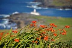Flores en Valentia. Irlanda Imágenes de archivo libres de regalías