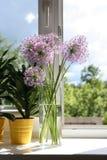 Flores en ventana-travesaño Imagen de archivo