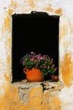 Flores en ventana vieja Foto de archivo libre de regalías