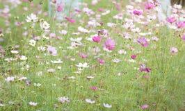 Flores en verano fotos de archivo