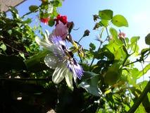 Flores en verano Imágenes de archivo libres de regalías