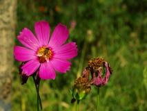 Flores en XiXi parque Fotografía de archivo libre de regalías