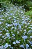 Flores en yarda Imágenes de archivo libres de regalías