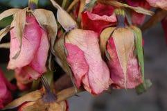 Flores enfermas Imagen de archivo