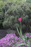 Flores Engelse Gr jardin Stock Afbeeldingen