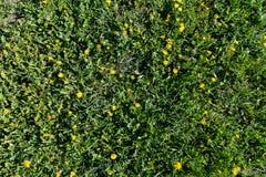 Flores entre a grama Fotos de Stock