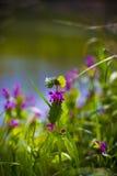 Flores entre las plantas Fotos de archivo libres de regalías