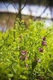 Flores entre las plantas Foto de archivo