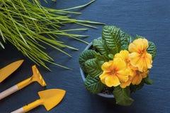 Flores, ervas, casa do cuidado dos artigos foto de stock