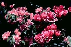 Flores escuras imagem de stock
