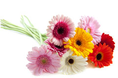 Flores especiais Foto de Stock