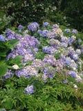Flores especiales Fotografía de archivo libre de regalías