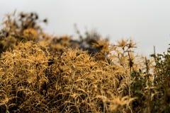 Flores espinosas imagen de archivo