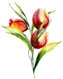 Flores estilizadas de los tulipanes Imágenes de archivo libres de regalías