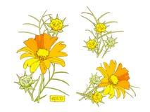 Flores estilizados do amarelo do vetor ajustadas Fotos de Stock Royalty Free