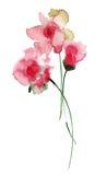 Flores estilizados do verão Imagens de Stock