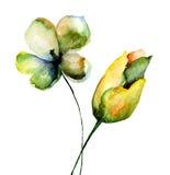 Flores estilizados dos tulips Foto de Stock Royalty Free