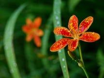 Flores exóticas Foto de Stock Royalty Free