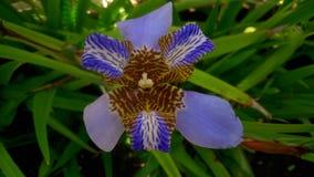 Flores exóticas Fotografía de archivo
