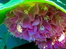 Flores exóticas Foto de archivo