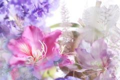 Flores exóticas bonitas Fotografia de Stock Royalty Free