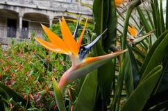 Flores exóticas brilhantes fotos de stock
