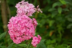 Flores exóticas de florescência do vermelho em uma haste Fotos de Stock Royalty Free