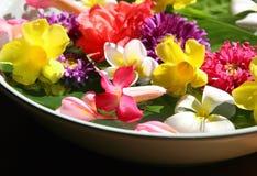 Flores exóticas en balneario fotografía de archivo libre de regalías