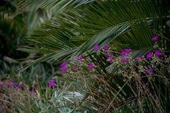 Flores exóticas púrpuras con las frondas de la palma Imagen de archivo