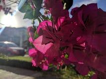 Flores exaltadas Imágenes de archivo libres de regalías