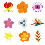 Flores exóticas Fotografía de archivo libre de regalías