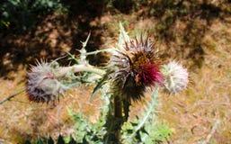 Flores extrañas Foto de archivo