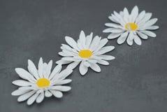 Flores falsas artificiales blancas de la manzanilla, hechas del material artificial Fondo del gris del cemento Primavera o concep Foto de archivo