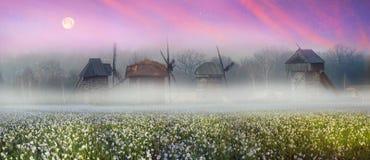 Flores fantásticas - açafrão Imagens de Stock