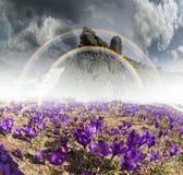 Flores fantásticas - açafrões Imagem de Stock