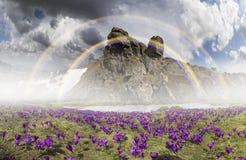 Flores fantásticas - açafrões Fotos de Stock Royalty Free