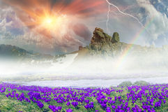 Flores fantásticas - azafranes Foto de archivo libre de regalías