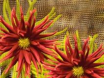 Flores fantásticas rojas, en fondo marrón primer Composición floral brillante, tarjeta para el día de fiesta Collage de flores Imagenes de archivo