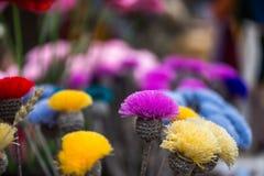 Flores feitos à mão Fotografia de Stock