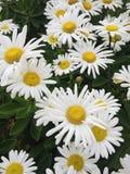 Flores felices fotos de archivo