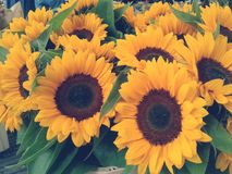 Flores felices Imagen de archivo libre de regalías