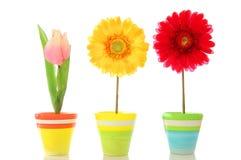 Flores felizes fotos de stock